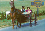 Amish Family and Their Horse and Buggy Postcard cs6972