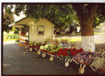 Amish Roadside Stand Postcard cs7025