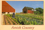Amish Woman Tilling Her Garden Postcard cs7029
