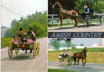 Amish Open Buggys Postcard cs7035