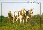 Amish Farmer with Team of Horses cs7127