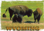 Click here to enlarge image and see more about item cs7282: Bison Buffalo Wyoming cs7282