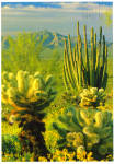 Click here to enlarge image and see more about item cs7540: Organ Pipe Cactus National Monument, Arizona