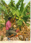 Click here to enlarge image and see more about item cs7568: Cutting Bananas in the Bahamas