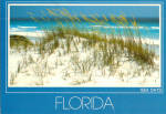 Click here to enlarge image and see more about item cs7680: Sea Oats and Sand Dunes , Florida Beaches
