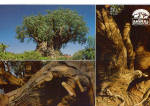 Click here to enlarge image and see more about item cs8010: Views of Disney s Animal Kingdom