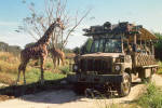 Click here to enlarge image and see more about item cs8011: Kilimanjaro Safaris Disney s Animal Kingdom