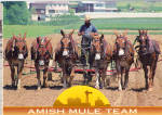 Amish Farm Scene with Six Mule Team cs8082