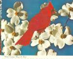 Click here to enlarge image and see more about item cs8192: North Carolina State Bird, The Cardinal, Dogwood Blossoms