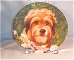 Click here to enlarge image and see more about item d2042: Wags to Riches-Benji The Movie Star- Collectors Plate
