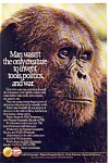 Click here to enlarge image and see more about item gas13: Gulf Oil Co. Chimpanzee Ad
