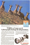 Click here to enlarge image and see more about item jan0378: Cannon F-1 Wildlife Nilgiri Tahr Ad