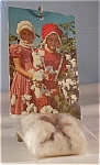 Novelty Postcard Boll of Cotton lp0103