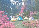 Click here to enlarge image and see more about item lp0112: Cypress Gardens FL Dancing Southern Belles Postcard lp0112