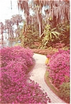 Click here to enlarge image and see more about item lp0114: Cypress Gardens  FL Azalea Lined Path Postcard lp0114