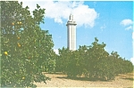 Click here to enlarge image and see more about item lp0166: Clermont FL,Citrus Tower Postcard lp0166