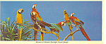 Click here to enlarge image and see more about item lp0228: Parrot Jungle,Florida Postcard