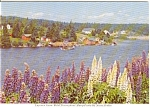 Click here to enlarge image and see more about item n0030: Colorful Lupines in Nova Scotia Canada   Postcard n0030