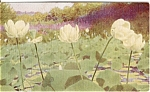 Click here to enlarge image and see more about item n0124: North American Lotus Postcard