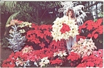 Click here to enlarge image and see more about item n0165: Poinsettia at Ott s Exotic Plants Postcard n0165