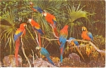 Click here to enlarge image and see more about item n0188: Parrot Jungle FL Postcard