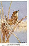 Click here to enlarge image and see more about item n0242: Long Billed Marsh Wren Audubon Postcard
