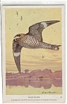 Click here to enlarge image and see more about item n0244: Nighthawk Audubon Postcard n0244