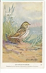 Click here to enlarge image and see more about item n0248: Savannah Sparrow Audubon Postcard n0248