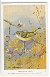 Click here to enlarge image and see more about item n0250: White Eyed Vireo Audubon Postcard n0250