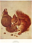 Click here to enlarge image and see more about item n0252: The Squirrels, by Albrecht Durer Postcard n0252