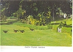 Monkton Maryland Ladew Topiary Gardens Postcard n0392