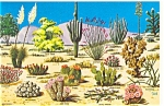 Click here to enlarge image and see more about item n0525: Cacti and Desert Flora of the Great Southwest Postcard n0525