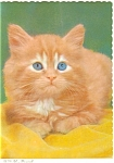 Adorable Tabby Kitten Postcard n0567