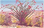 Cholla Cactus and Giant Saguaro Cactus Postcard