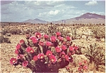 Click here to enlarge image and see more about item n0582: Strawberry Hedgehog Cactus Postcard n0582