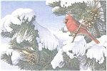 Click here to enlarge image and see more about item n0589: Cardinal and Chickadee  Postcard