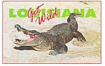 Click here to enlarge image and see more about item n0628: Louisiana Alligator Get Wild Postcard n0628