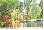 Click here to enlarge image and see more about item n0702: Charleston SC Magnolia Gardens Postcard n0702