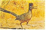 Click here to enlarge image and see more about item n0779: The Road Runner Postcard n0779