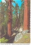 Redwoods Road to Sherman Tree Kings Canyon National Park CA Postcard n0895