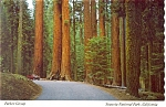 Sequoia National Park Parker Group Postcard n0898