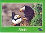 Click here to enlarge image and see more about item n0909: Horned Puffin Postcard