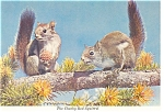 Cheeky Red Squirrels Postcard