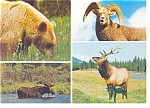 Click here to enlarge image and see more about item n0912: Animals of the Mountains of Western Canada Postcard n0912
