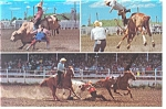 Rodeos in Big Wyoming Postcard