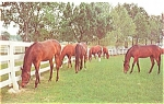 Click here to enlarge image and see more about item n0927: Grazing Horses Postcard n0927