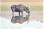 Click here to enlarge image and see more about item n0948: The Canadian Moose Postcard