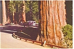 Click here to enlarge image and see more about item n0987: Grant Grove Kings Canyon National Park CA Postcard n0987