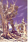 Click here to enlarge image and see more about item n1046: Great Basin National Park Postcard