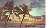 Sun on the Horizon in Florida Postcard n1050